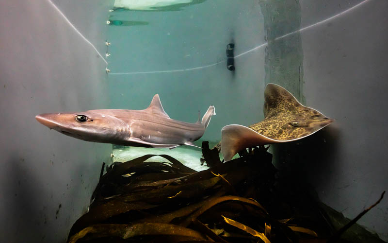 Shark Lab Tours and Environmental Internships